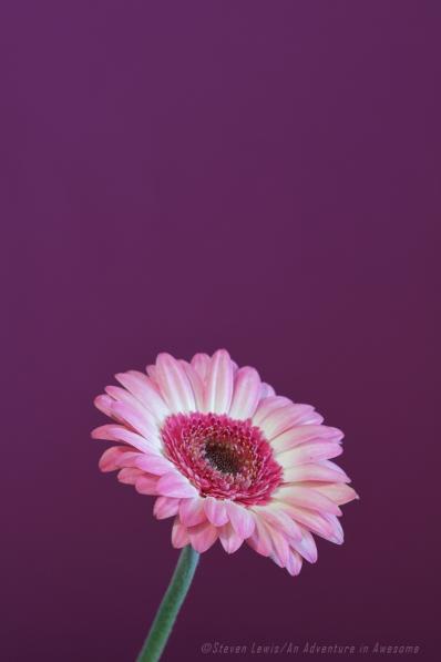Color_0212